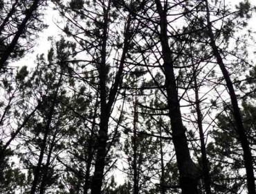 Los montes conveniados emplazan a la Xunta a consensuar todas las talas