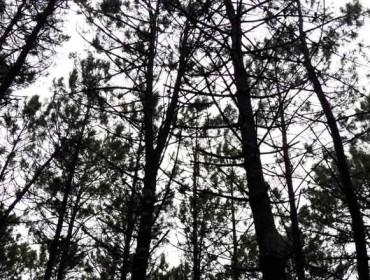 Jornadas sobre la estrategia forestal de Pontevedra