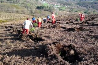 Resoltas as axudas para primeira forestación de terras non agrícolas