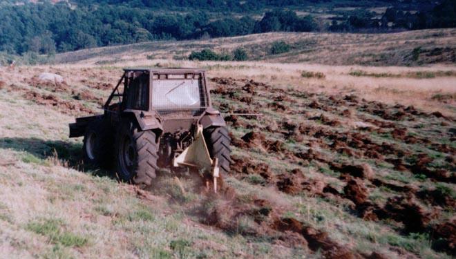 Tractor facendo un labor de subsolado nas liñas de plantación.