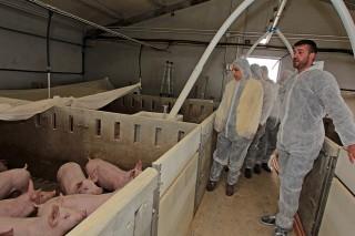 Aprobada a normativa sobre a receita electrónica de antibióticos en veterinaria