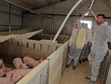 Aprobada la normativa sobre la receta eletrónica de antibióticos en veterinaria
