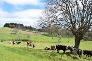 Vigo acollerá este mes o Congreso Internacional de Agroecoloxía