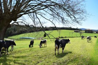 As granxas do Norte de España teñen a metade de terras da media europea