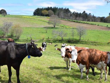 Agricultura publicará o prezo no campo do leite ecolóxico e do que vai para D.Os de queixo