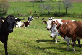 """""""Este ano o prezo do leite ecolóxico subiunos arredor dun 20%"""""""