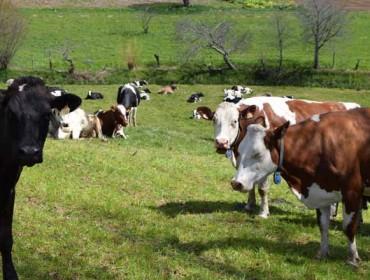 Jornada en Santiago sobre producción de leche ecológica