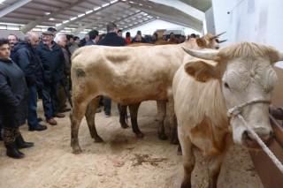 Poxa e concurso de raza rubia galega este fin de semana no Corgo