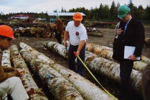 Clasificación do bidueiro nun parque de madeira de Canadá.