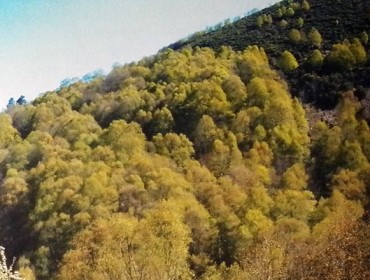¿Son las frondosas caducifolias una oportunidad perdida?