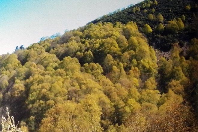 Son as frondosas caducifolias unha oportunidade perdida?