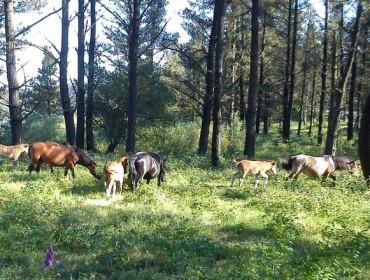 Programa de intercambio en Galicia y Portugal sobre la gestión de montes vecinales