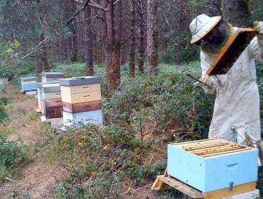 Curso de apicultura básico no concello de Láncara