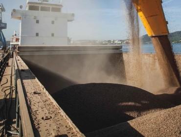 Biomasa Forestal, o pellet con valor de marca