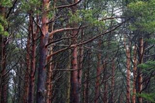 La Xunta prorroga hasta 2021 la vigencia de los convenios con los montes vecinales
