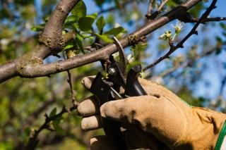 Curso de poda e enxerta de árbores froiteiras