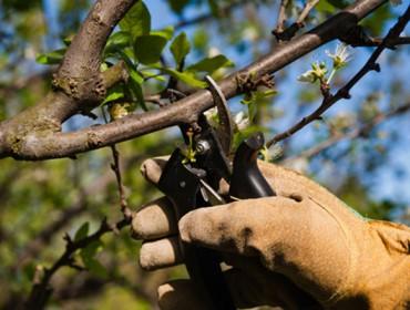 Xornada formativa sobre poda de froiteiras en Boimorto