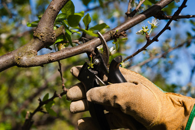 Recomendacións para a poda das froiteiras