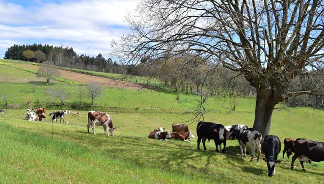 Gu a para la producci n de leche de vaca en ecol gico - Como cocinar las setas lengua de vaca ...