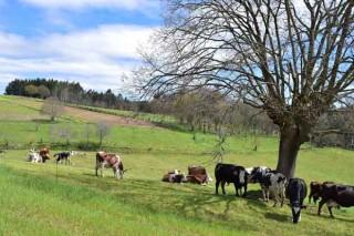 Puleva Eco prevé incrementar nun 50% o envasado de leite ecolóxico galego no próximos cinco anos