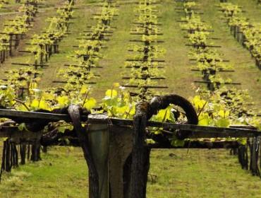 Recomendacións para o abonado da viña