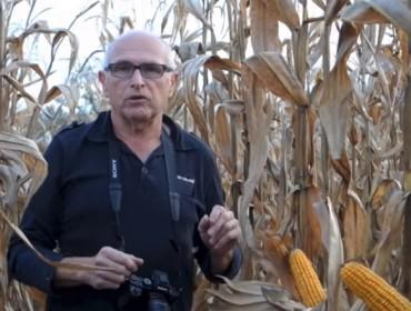 «Galicia é unha das mellores rexións de Europa para o cultivo do millo»