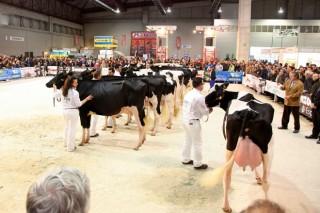 ¿Son más rentables las vacas lecheras más grandes?