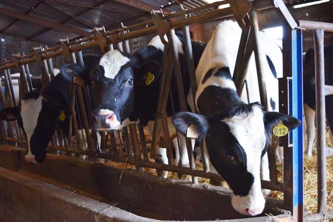 Siete claves sobre las ayudas de la UE para la crisis del sector lácteo