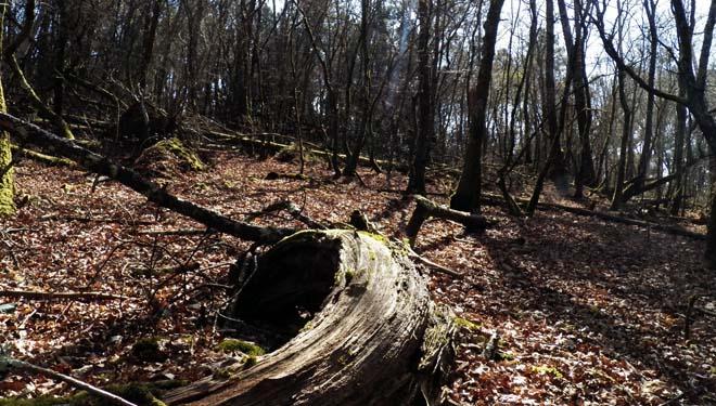 Gestión forestal de las carballeiras o abandono?