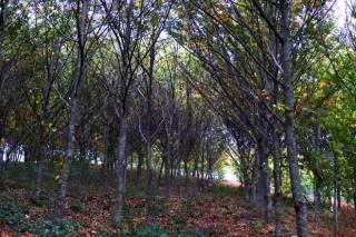 Inscritos 5 montes de Pontevedra no rexistro de masas de frondosas autóctonas