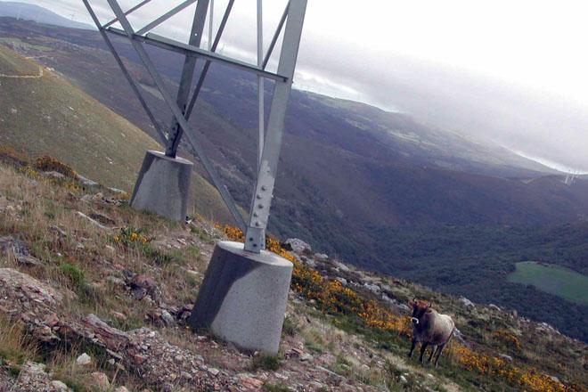 A Xunta proxecta obrigar ós propietarios a cortar o arborado nas marxes das liñas eléctricas