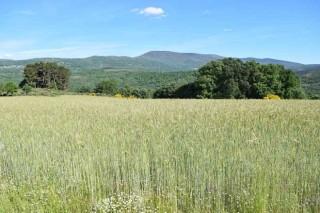 Coren comezará en 2019 a cultivar cereal ecolóxico en Galicia para as súas producións gandeiras
