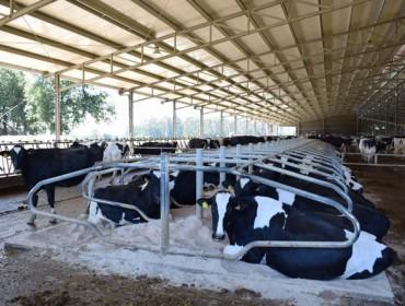 """""""Una hora más de descanso de la vaca son dos litros de leche más por ordeño"""""""