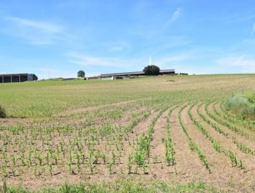 As explotacións lácteas galegas precisan 130.000 hectáreas máis para asegurar o seu futuro