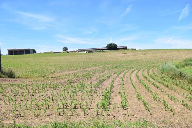 Las explotaciones lácteas gallegas necesitan 130.000 hectáreas más para asegurar su futuro