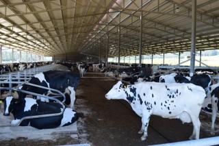 A Deputación da Coruña destina 150.000 euros para axudas a organizacións de produtores lácteos