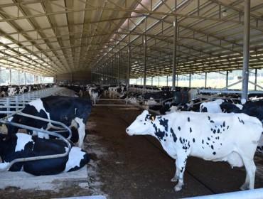 La Diputación de A Coruña destina 150.000 euros para ayudas a organizaciones de productores lácteos