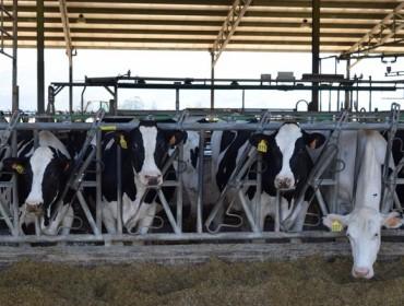 Europa producirá máis leite no 2017