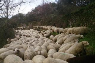 Curso de adestramento de cans de pastoreo en Cospeito
