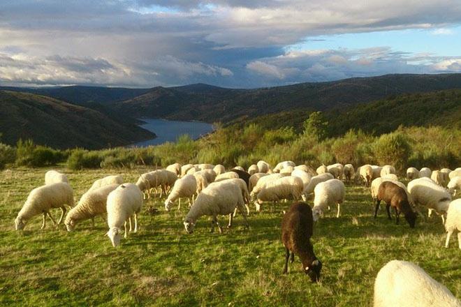 O consumo de carne aguanta, con boas perspectivas para a avicultura e o ovino