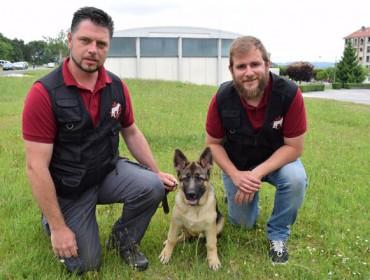 Velucan: os cans que detectan niños de Vespa Velutina