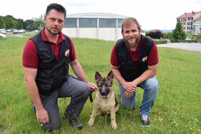 Velucan: los perros que detectan nidos de Vespa Velutina