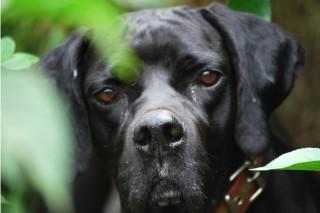 Descontento con el anteproyecto de ley sobre animales de compañía