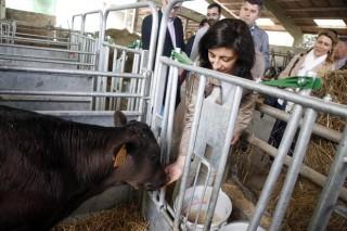 Novo ciclo  en Sergude de técnico superior en gandaría e asistencia en sanidade animal