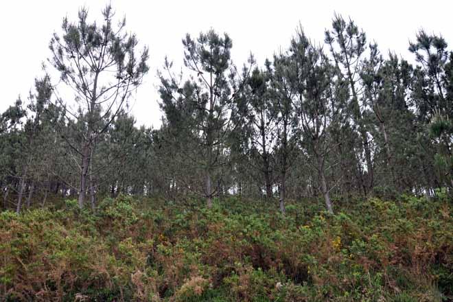 Medio Rural destinará 4 millones de euros a proyectos de ordenación de montes