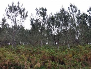 Medio Rural destinará 4 millóns de euros a proxectos de ordenación de montes