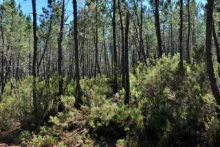 Medio Rural acláralle ós silvicultores do Morrazo que apoiará agrupacións de 10 hectáreas