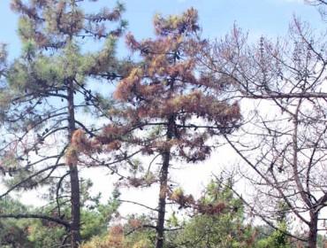 Reuniones informativas por la ampliación de la zona  demarcada del  nematodo del pino