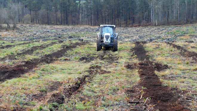 Unha investigación analiza cal é a silvicultura que logra mellores piñeiros en Galicia