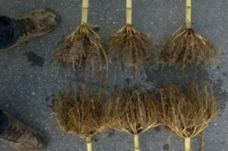 Sementar microorganismos, novos socios para os cultivos